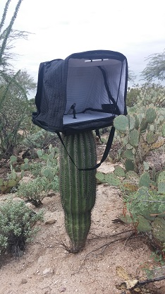 covb on cactus-10